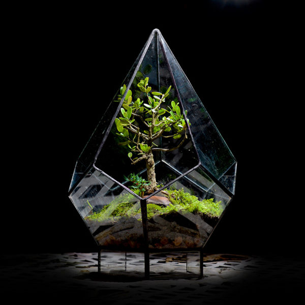 Diamond-Terrarium-Bonsai