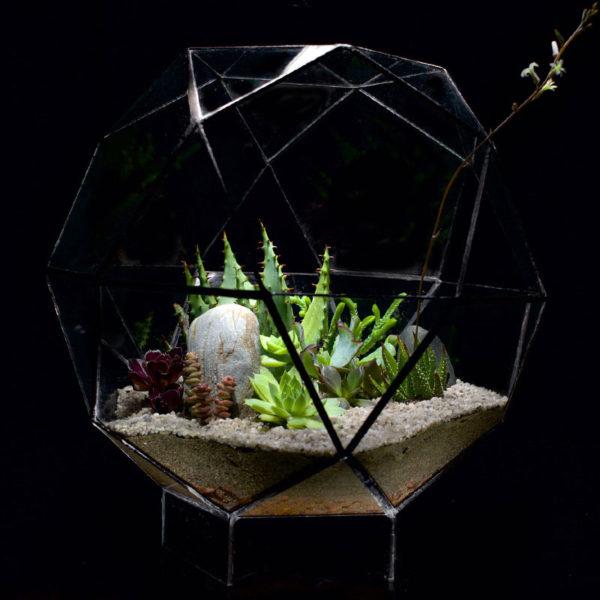 Icosahedron-Terrarium-Succulents