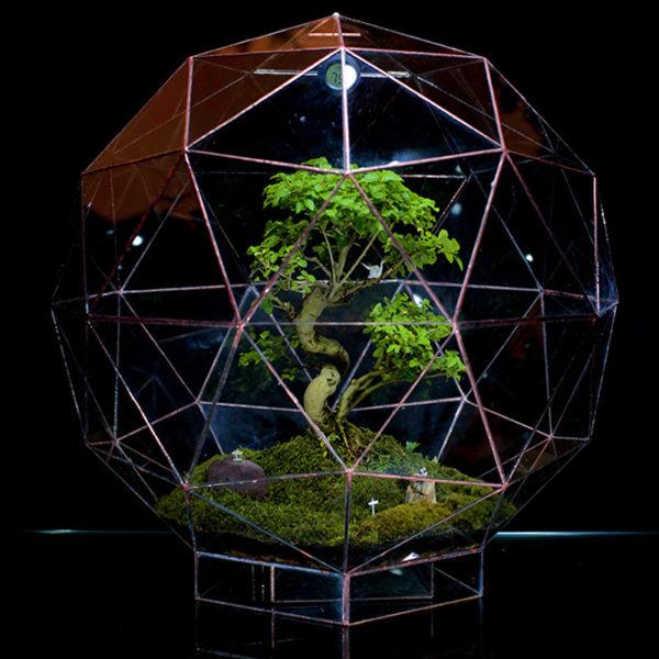 Pentakis-Dodecahedron-Bonsai