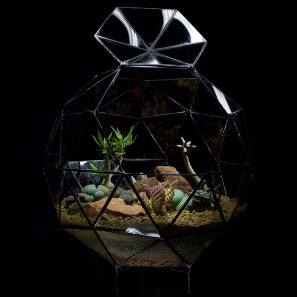 Pentakis-Dodechadron-Terrarium-Succulents