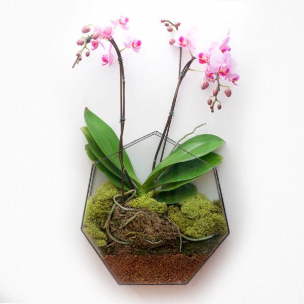 A+E-Heptagon-Flower