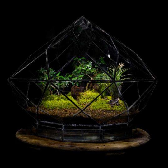 Diamond Terrarium