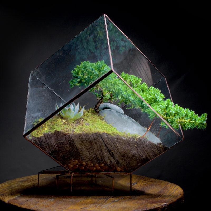 Cube Glass Terranium