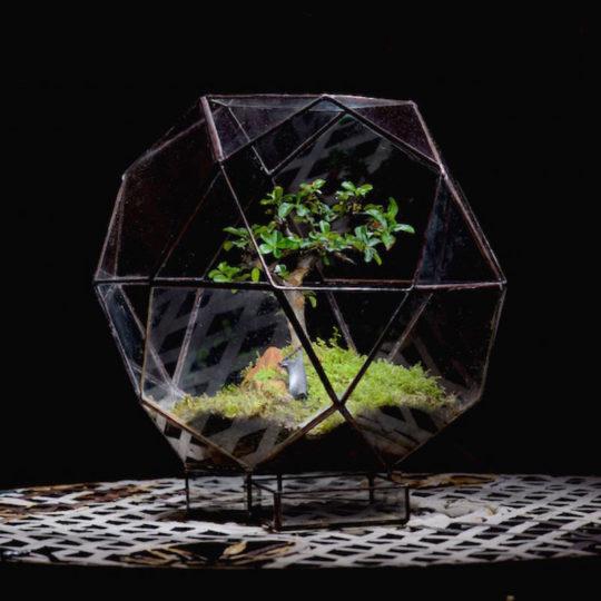 Icosahedron Terrarium