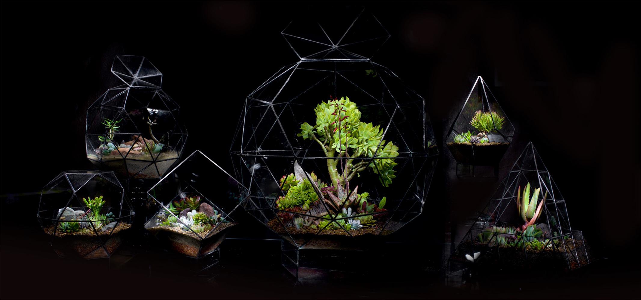 Ae-terrarium